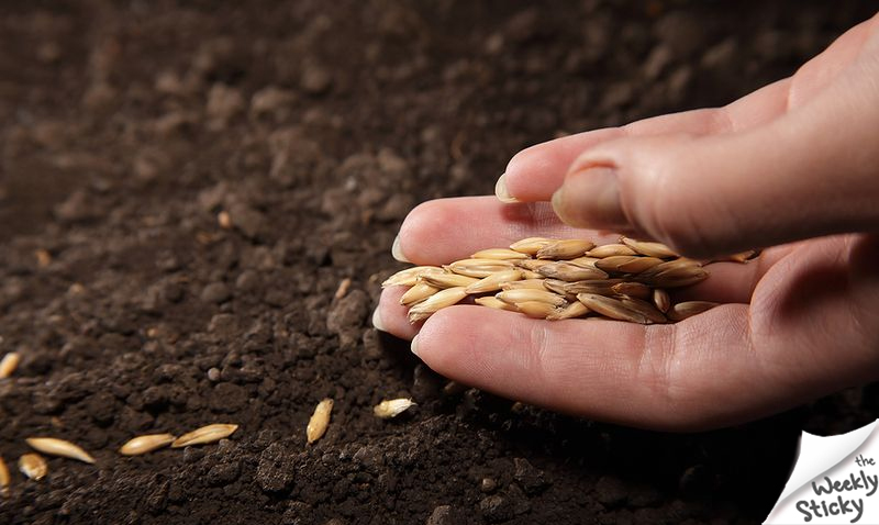 Sowing Seed